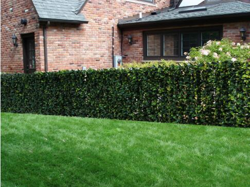 Century-Outdoor-Living-Artificial-Planes-Hedge-Fence-Covering-COLG0602A003