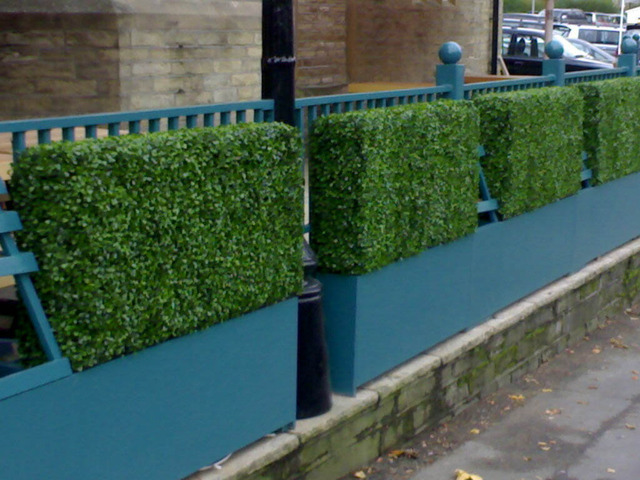 Boxwood Privacy Hedges