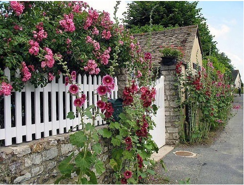 What is The Best Plants to Decorate Your Garden Fence
