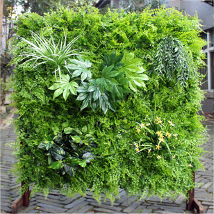 Lush Forests Green Wall Item No. G0687L002 Size: 1m X 1m, Clivia Vertical  Garden